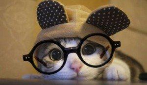 animales con gafas
