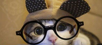 Estos animales apuestan por las gafas como complemento de belleza.
