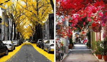 15 Mágicas calles de alrededor del mundo donde flores y árboles son protagonistas.