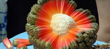 las frutas mas raras del mundo