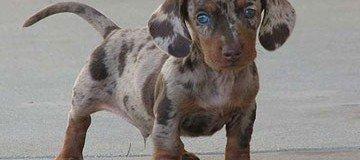 25 Perros de raza mestiza tan hermosos que los querrás en tu vida hoy mismo.
