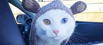 12 Animales hermosos que destacan por sus excepcionales ojos de distinto color.