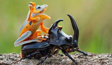 Estos adorables animales consiguieron hábilmente viajar con estilo. Oh si.