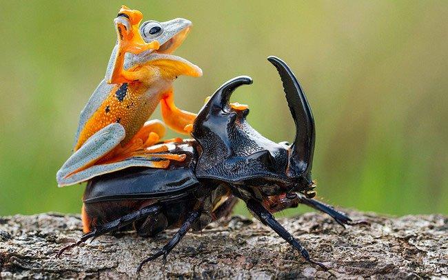 animales-viajando-sobre-animales14