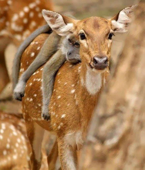 animales-viajando-sobre-animales16