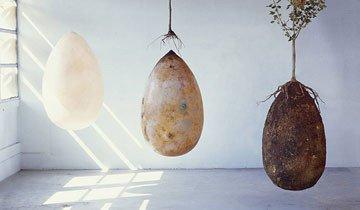 Si no te gustan las ataúdes, tranquilo, ahora puedes servir como nutriente para un árbol.