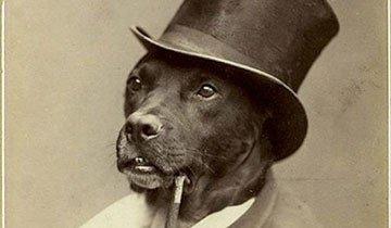 Estas fotografías antiguas de mascotas demuestran que nada ha cambiado en 100 años.