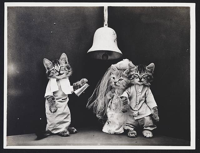 fotos-antiguas-divertidas-mascotas15