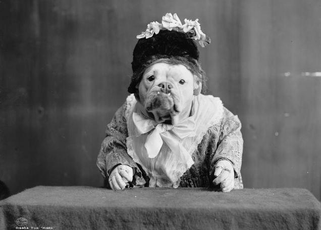 fotos-antiguas-divertidas-mascotas17
