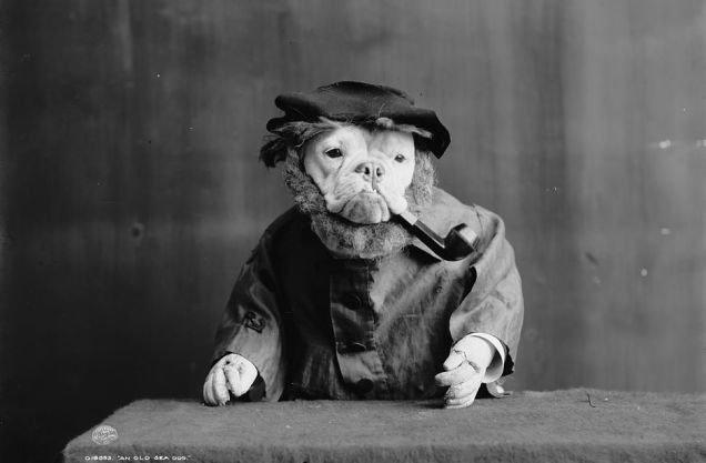 fotos-antiguas-divertidas-mascotas18