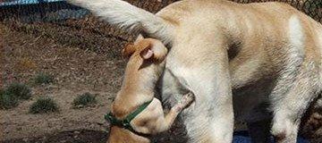 25 Fotos de perros que no tienen explicación alguna, aunque te reirás con ellas.