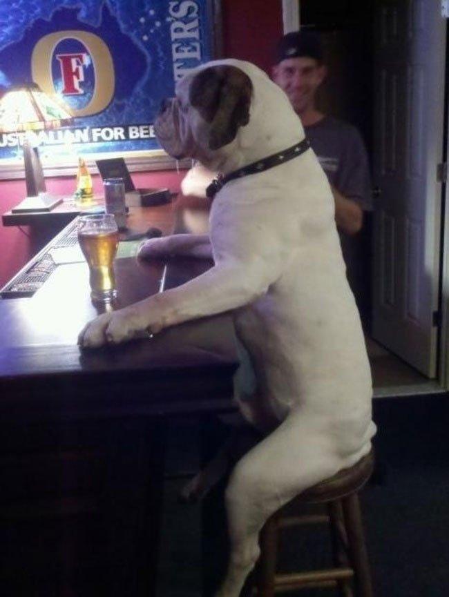 fotos-perros-inexplicables13