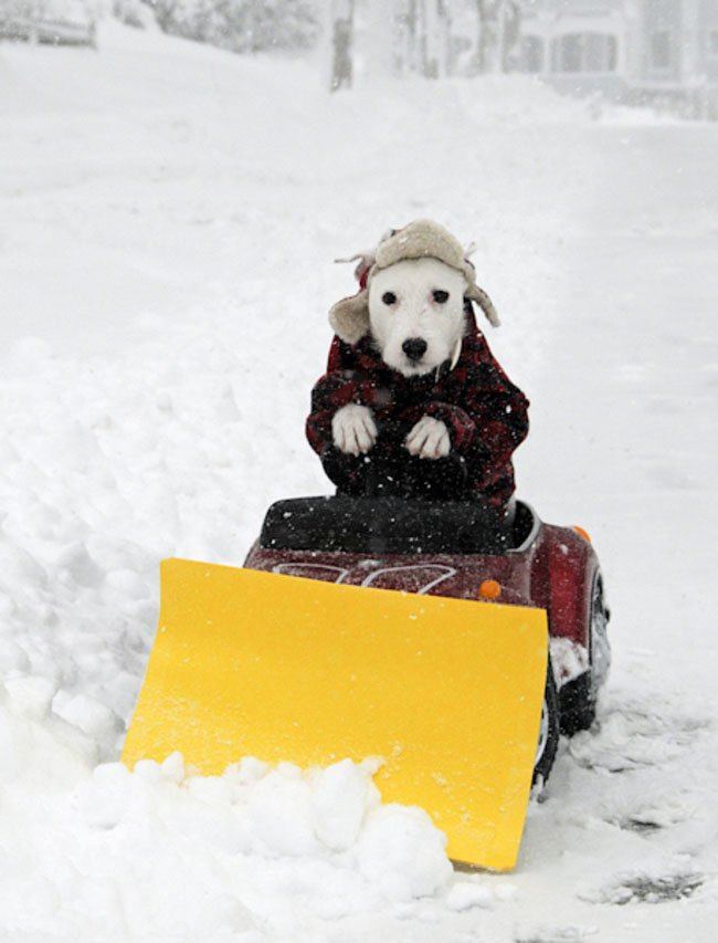 fotos-perros-inexplicables14