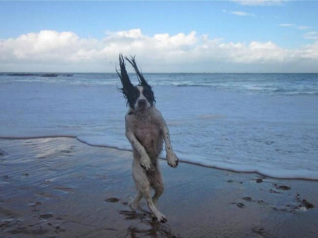fotos-perros-inexplicables15