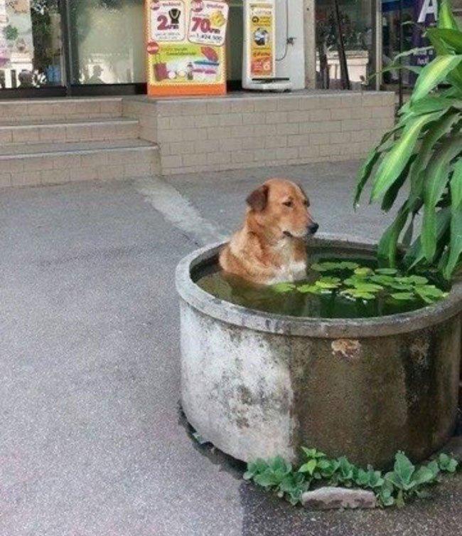 fotos-perros-inexplicables2