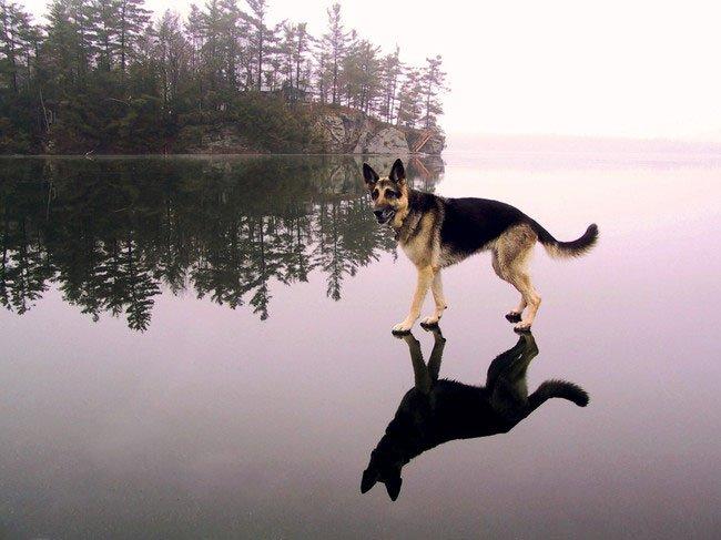 fotos-perros-inexplicables23