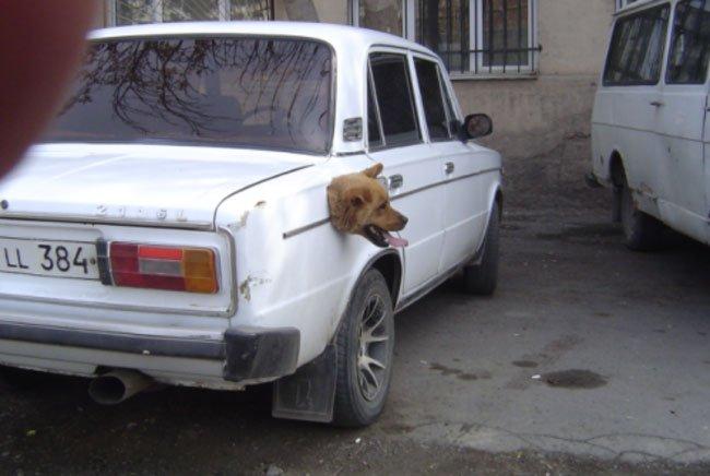 fotos-perros-inexplicables6