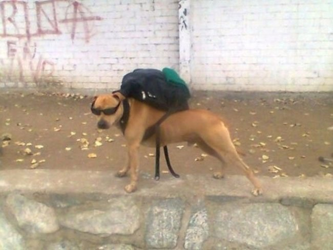 fotos-perros-inexplicables7