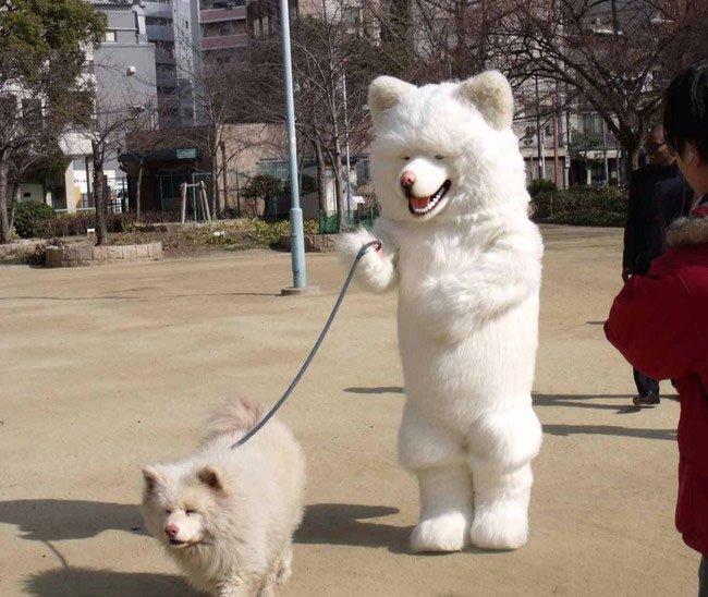 fotos-perros-inexplicables9
