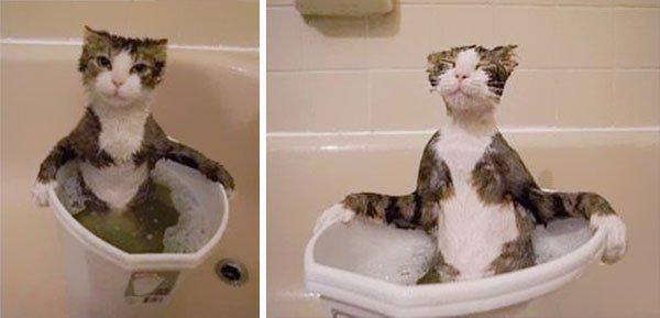 gatos-aman-agua1