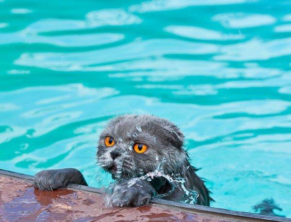 gatos-aman-agua11