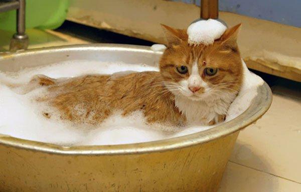 gatos-aman-agua14