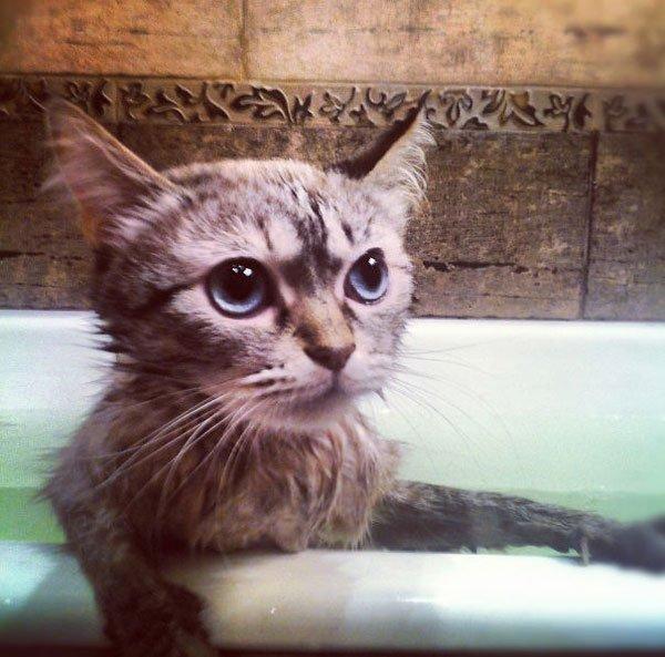 gatos-aman-agua15