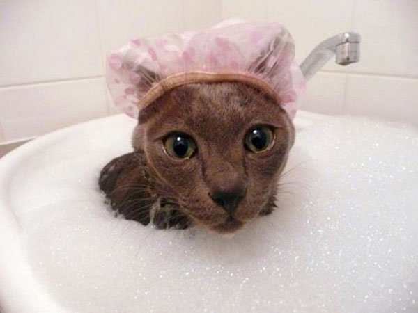 gatos-aman-agua6