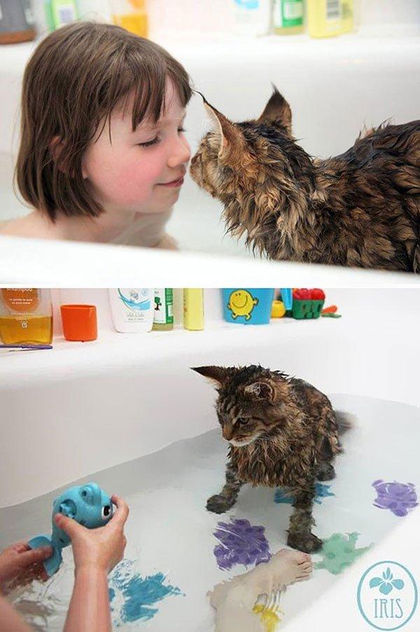 gatos-aman-agua7