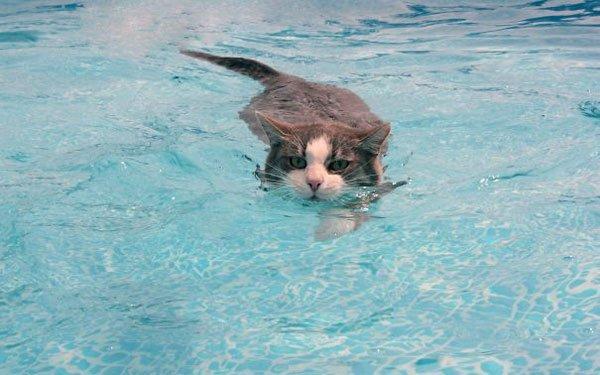 gatos-aman-agua8