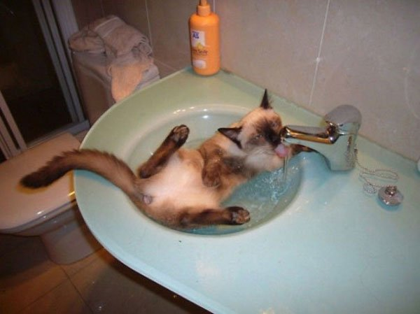 gatos-aman-agua9