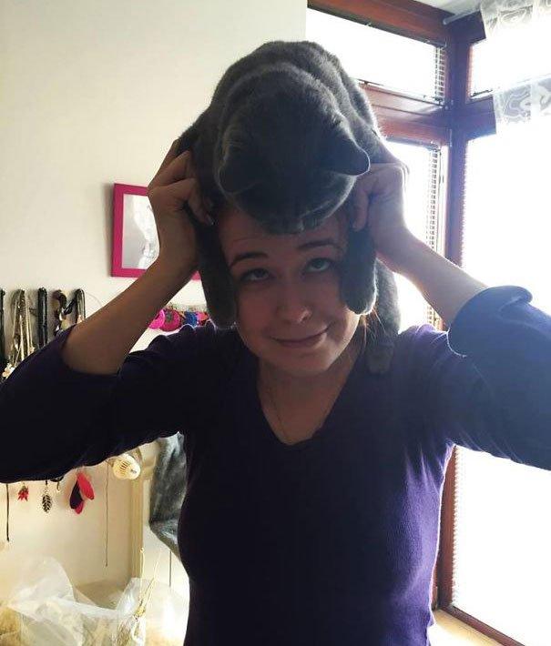 gatos-como-sombreros1