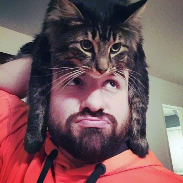 gatos-como-sombreros10