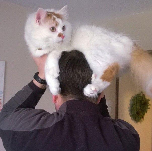 gatos-como-sombreros12