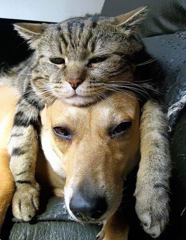 gatos-como-sombreros13