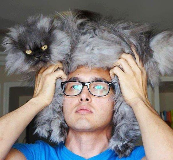 gatos-como-sombreros16