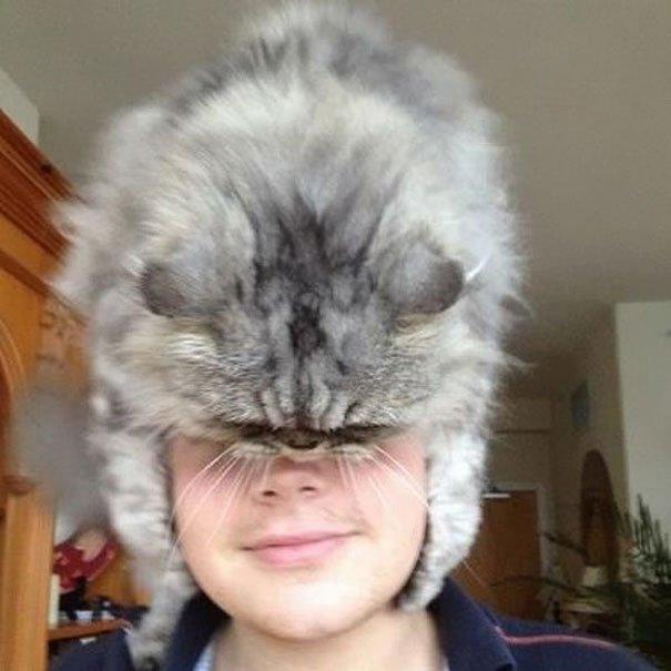 gatos-como-sombreros17