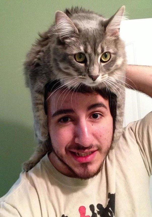gatos-como-sombreros18