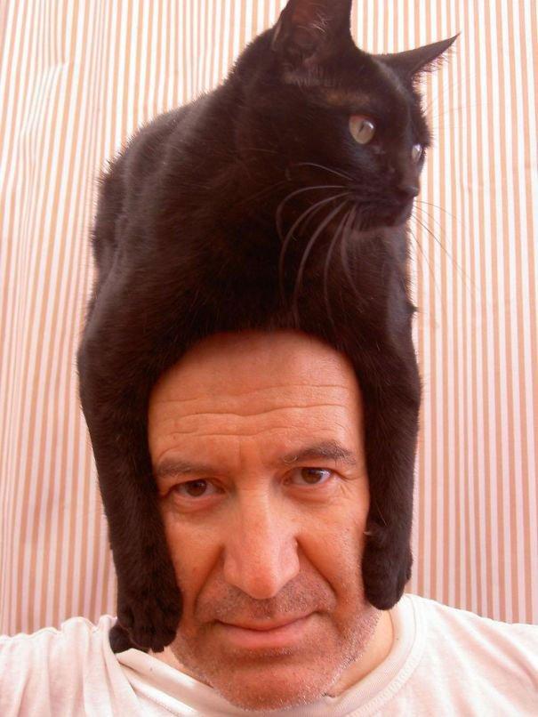 gatos-como-sombreros19