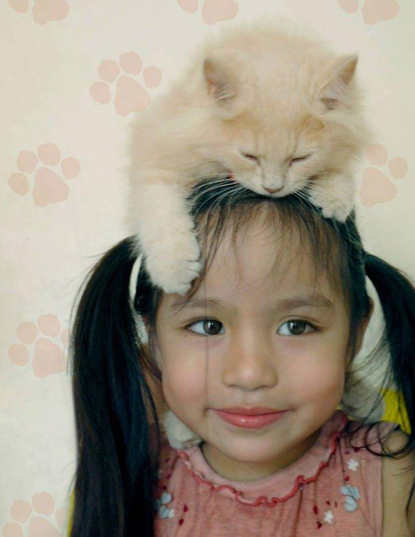 gatos-como-sombreros20