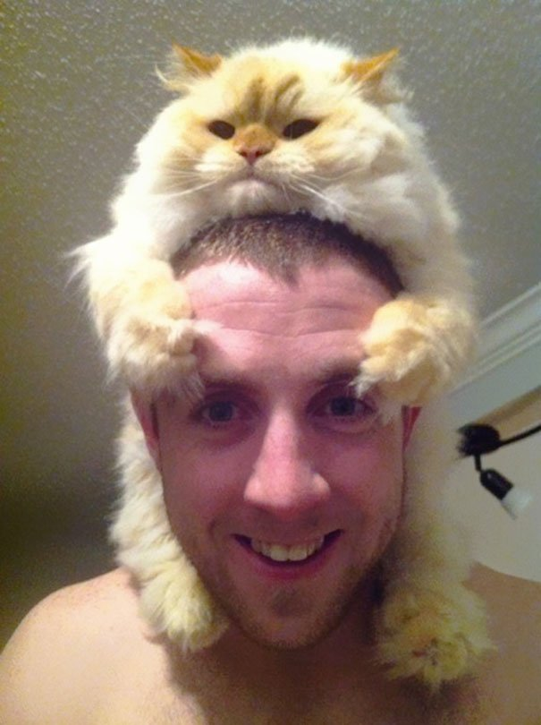 gatos-como-sombreros6