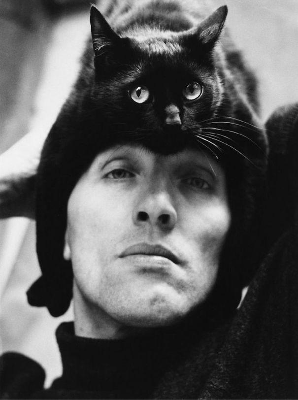 gatos-como-sombreros9