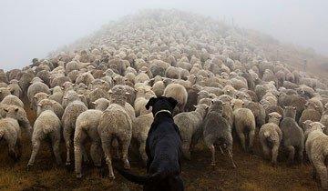 perros trabajadores