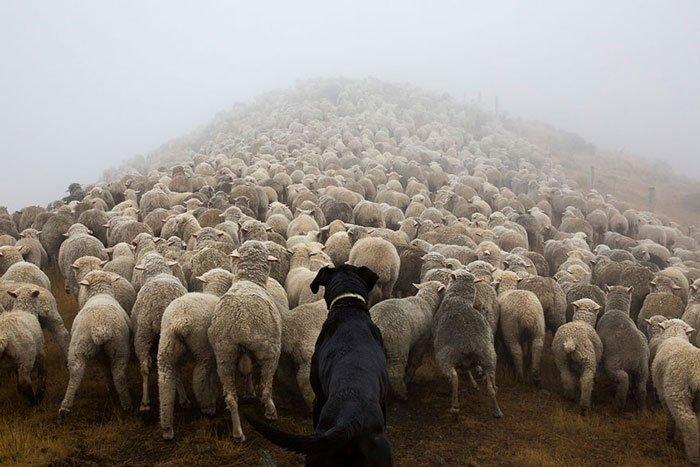 perros-trabajadores1