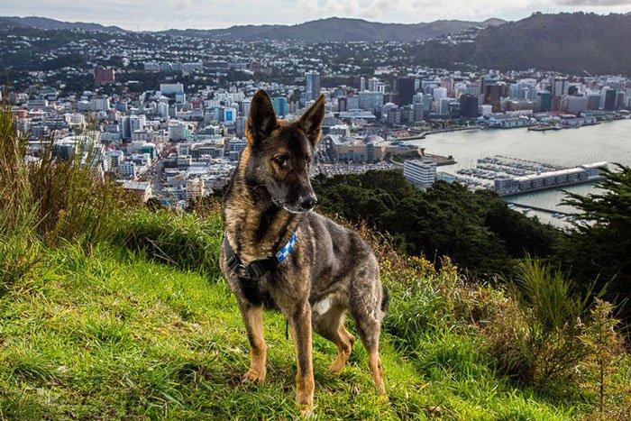 perros-trabajadores10