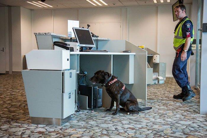 perros-trabajadores16