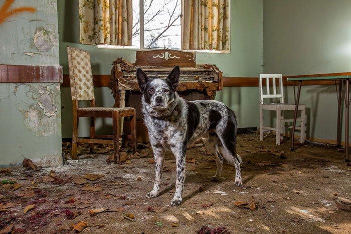 perros-trabajadores19