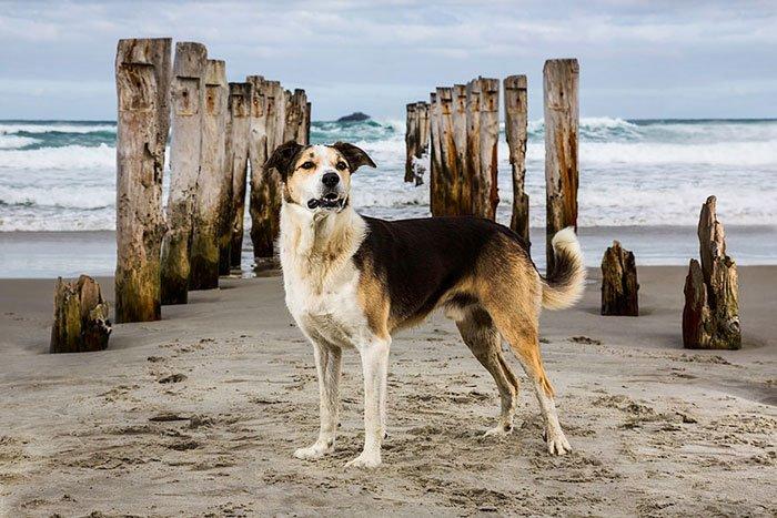 perros-trabajadores5
