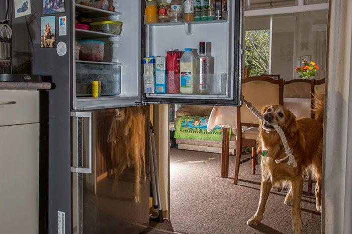 perros-trabajadores7