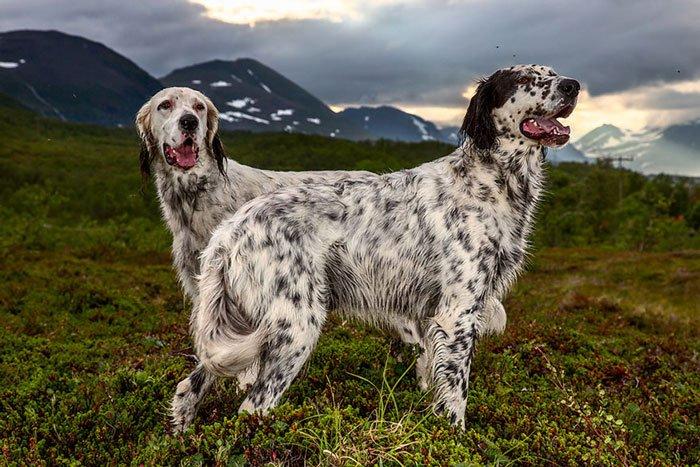 perros-trabajadores8